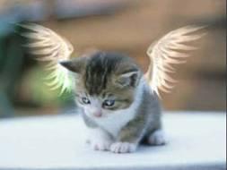 2007-22. De Saint Raphaël et des Anges... dans Chronique de Lully chatange