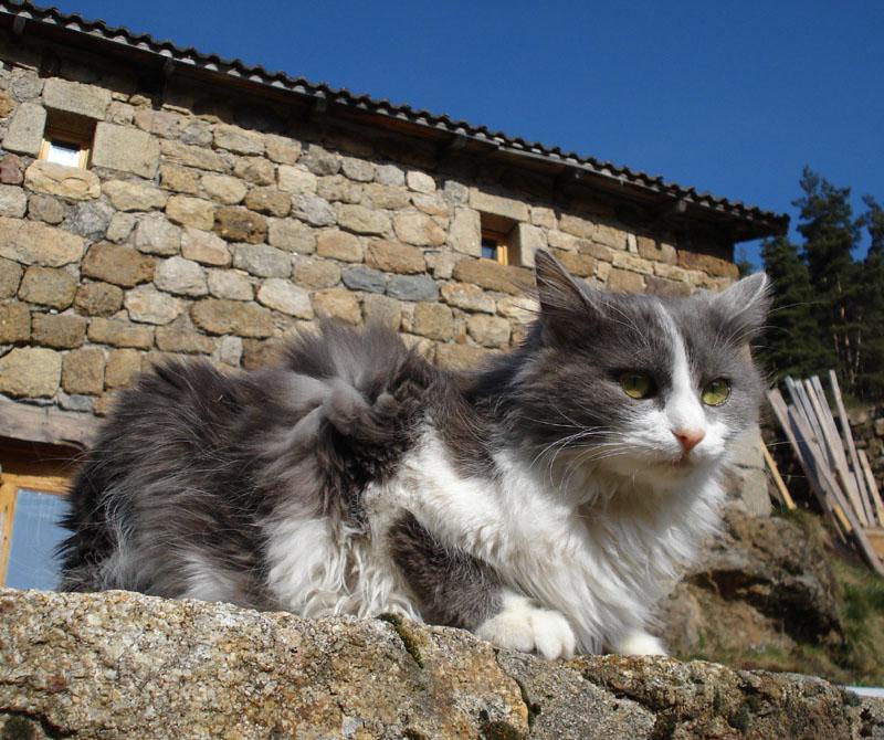 Chlôris prend le soleil sur la terrasse en arrivant de la clinique