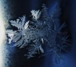 Féeries hivernales (février 2012)