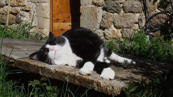 le-plus-heureux-des-chats événements