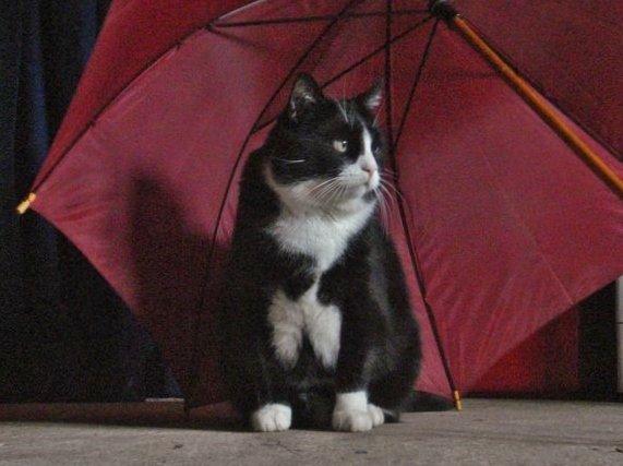 Lully au parapluie rouge