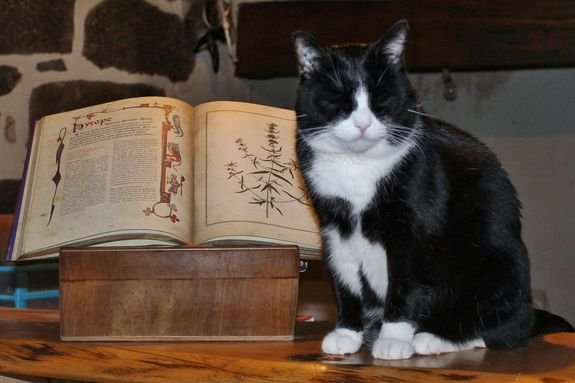 Lully et le livre des Simples d'Erika Laïs