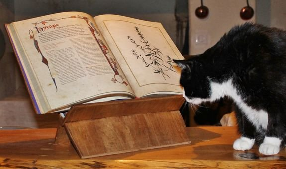 Lully lecteur attentif du Livre des Simples