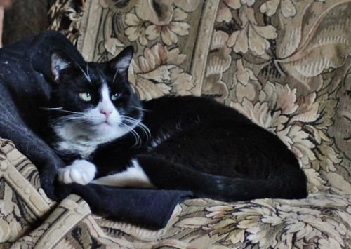 Maître-Chat Lully au divan