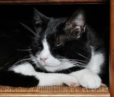 Maître-Chat Lully en méditation métaphysique
