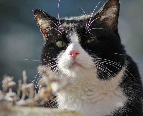 Lully au regard perçant
