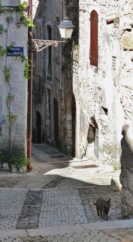 Chats de Viviers 1