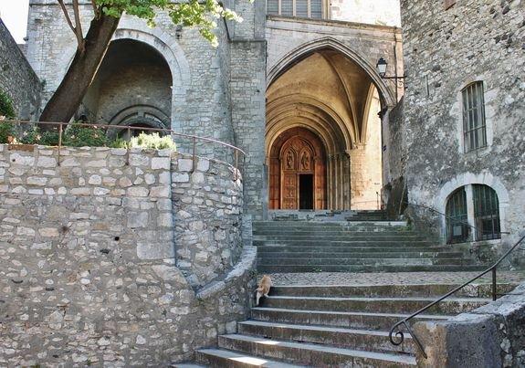 Chats de Viviers 11