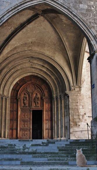 Chats de Viviers 12