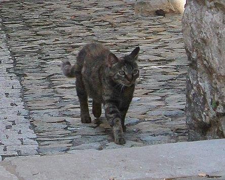 Chats de Viviers 2