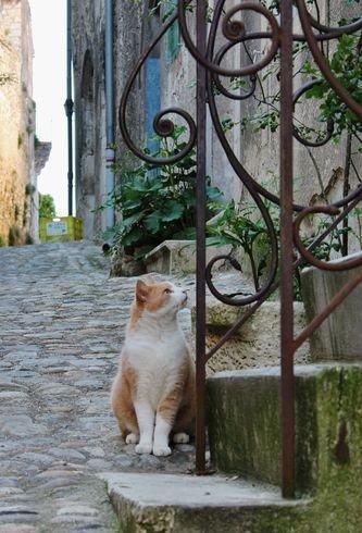 Chats de Viviers 9