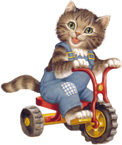chat en tricycle