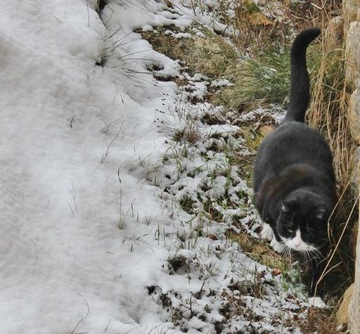6 - Lully tente une sortie par la porte