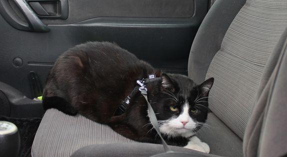 2 - Lully en voiture